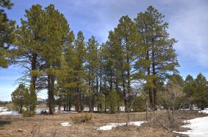 Property for sale at 478 S Badger Trail, Ridgway,  CO 81432