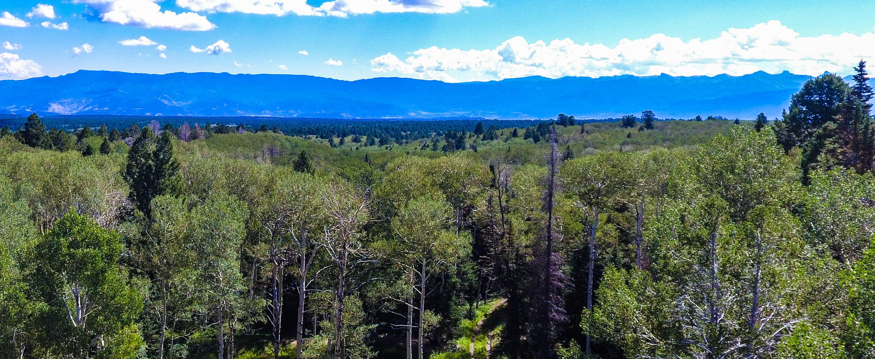 Lot 7 455 Black Bear Trail Ridgway CO 81432