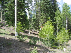 TBD Palmyra Drive Mountain Village CO 81435