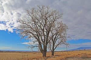 6953 6250 Trail Montrose CO 81401