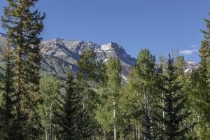 124 Lawson Pt Mountain Village CO 81435
