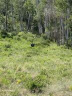 7 Porcupine Drive Placerville CO 81430