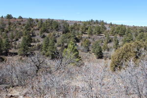 TBD Lot 2A Beaver Pines Subdivision Road Norwood CO 81423