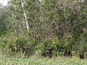 344 Maverick Lane Montrose CO 81403