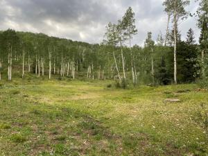 TBD Elk Run Road, Telluride, CO 81435