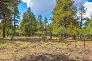 244 S Badger Trail Ridgway CO 81432