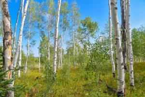 47 Salt Trail Montrose CO 81403