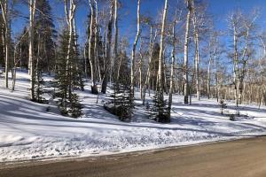 TBD Wapiti Road Telluride CO 81435