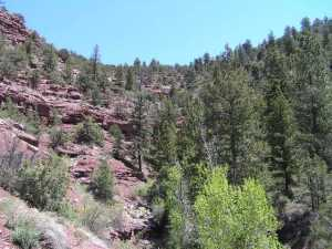 tbd Highway 145, Fall Creek, Placerville, CO 81430