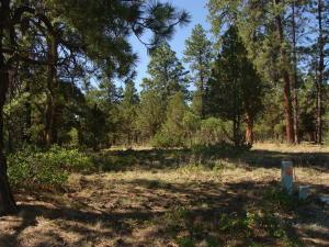 1230 Marmot Drive Ridgway CO 81432