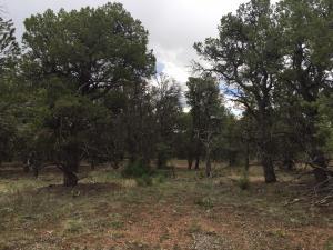 125 Turkey Trail Ridgway CO 81432