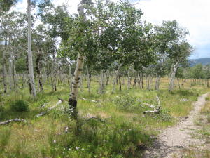 LOT F Top of the World Drive Placerville CO 81430