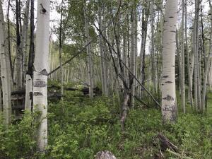 tbd Elk Wallow Road Placerville CO 81430