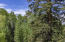 Lot 4, located downhill of Lot 2, has large Douglas Fir, Aspens and ditch water running by.