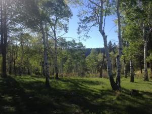 TBD M44 Road Placerville CO 81430