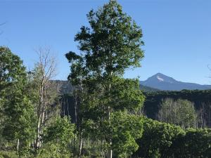 TBD County Road M44 Placerville CO 81430