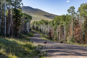 Lot 5 Sheridan Trail Ridgway CO 81432