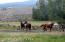 Fenced, irrigated horse pastrure