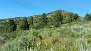 subject rises up to hilltop homesite