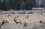 Elk Herd on Lot 8B, Bar-B-Bar Ranches