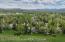 3070 N WHITE PINE LANE, Wilson, WY 83014