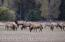 Fall Elk Rut at the Bar-B-Bar Ranches, Lot 8B