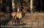 Bull elk in rut at the Bar-B-Bar Ranches