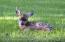 Wildlife roams the property