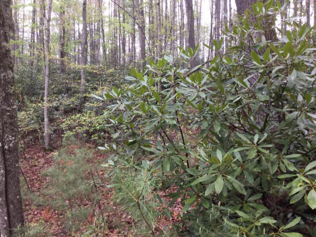 Image for LOT/TRACT,RESORT/VACATION,UNIMPROVED FOR SALE IN   SUBDIVISION (GREENE COUNTY)