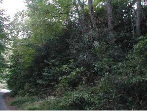 121 Banjo Ridge Lot 1