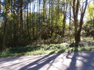 TBD COLD SPRINGS Road, Mountain City, TN 37683
