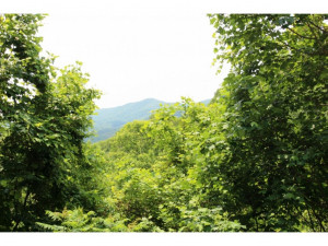 Property for sale at TR1 BRUSHY FORK Road, Trade,  Tennessee 37691