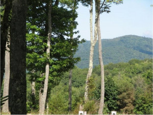 Property for sale at Lot 8 Of Cross Mountain Road, Shady Valley,  Tennessee 37688