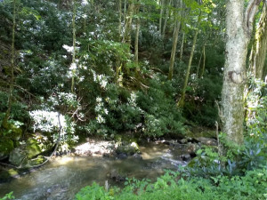Property for sale at TBD OLD FORGE CREEK Road, Mountain City,  Tennessee 37683