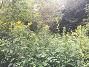 Lot 8 Hemlock, Mountain City, TN 37683