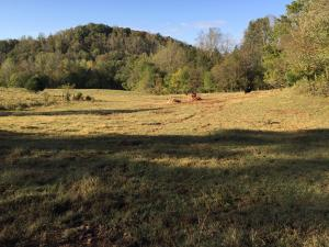 00 Grindstaff Hollow Road, Elizabethton, TN 37643