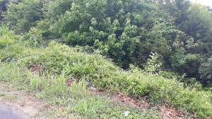 0 Pelican Lane, Greeneville, TN 37743