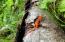 000 Sugar Hollow Road, Roan Mountain, TN 37687