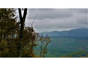 Tbd Fire Tower Road, Mooresburg, TN 37811