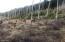 Elk roaming the neighboring wildlife cooridor
