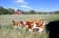 2315 Eagle Ranch, Eagle, CO 81631