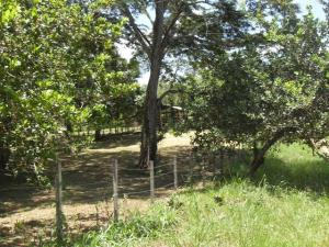 Terreno En Ventaen Higuerote, Higuerote, Venezuela, VE RAH: 13-246