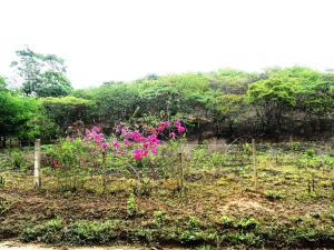 Terreno En Ventaen Municipio Libertador, Santa Isabel, Venezuela, VE RAH: 13-3084