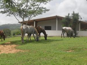 Terreno En Ventaen Los Teques, Sector Paracotos, Venezuela, VE RAH: 13-5050
