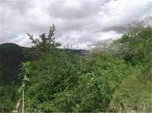 Terreno En Ventaen Caracas, El Hatillo, Venezuela, VE RAH: 15-9525