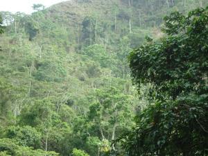 Terreno En Ventaen Parroquia Carayaca, Sector Puerto Cruz, Venezuela, VE RAH: 15-11092