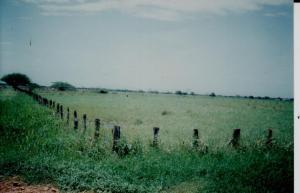 Terreno En Ventaen Carretera Falcón Zulia, Km 42, Venezuela, VE RAH: 15-4527