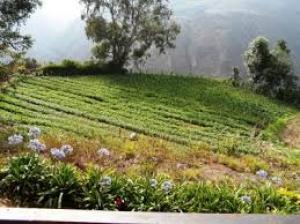 Terreno En Ventaen La Mesa, Sector El Molino, Venezuela, VE RAH: 14-7934