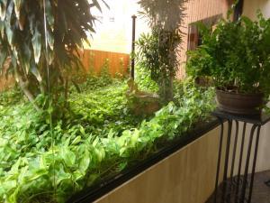 Apartamento En Alquileren Maracaibo, La Lago, Venezuela, VE RAH: 18-9083