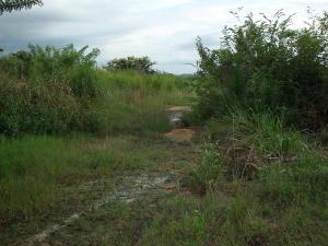 Terreno En Ventaen Yaritagua, Municipio Peña, Venezuela, VE RAH: 18-13387